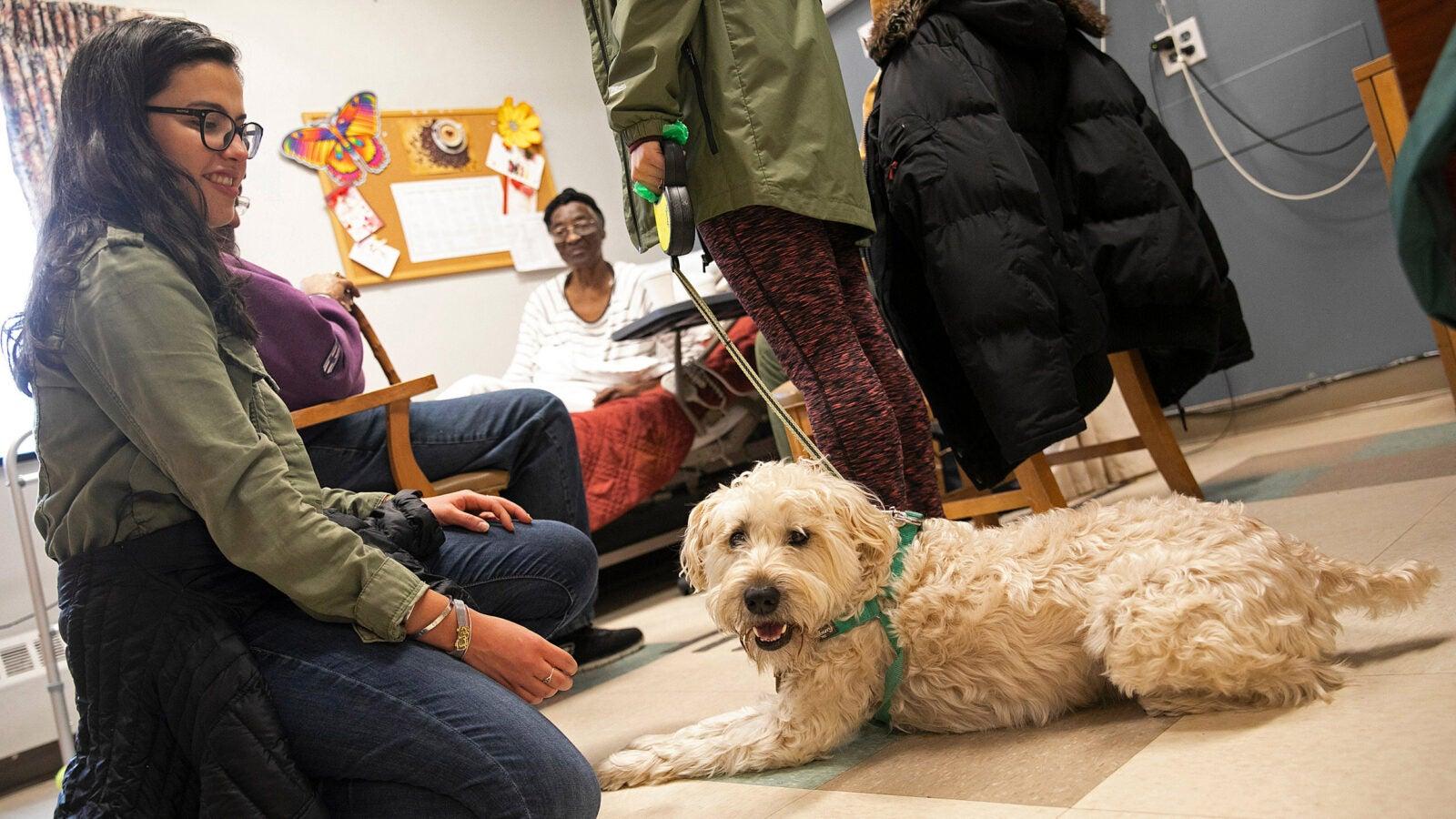 Man petting dog, women kneeling with dog