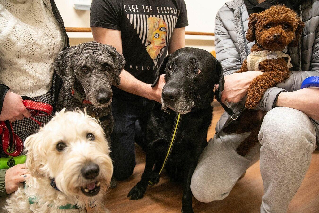 4 dogs looking at camera