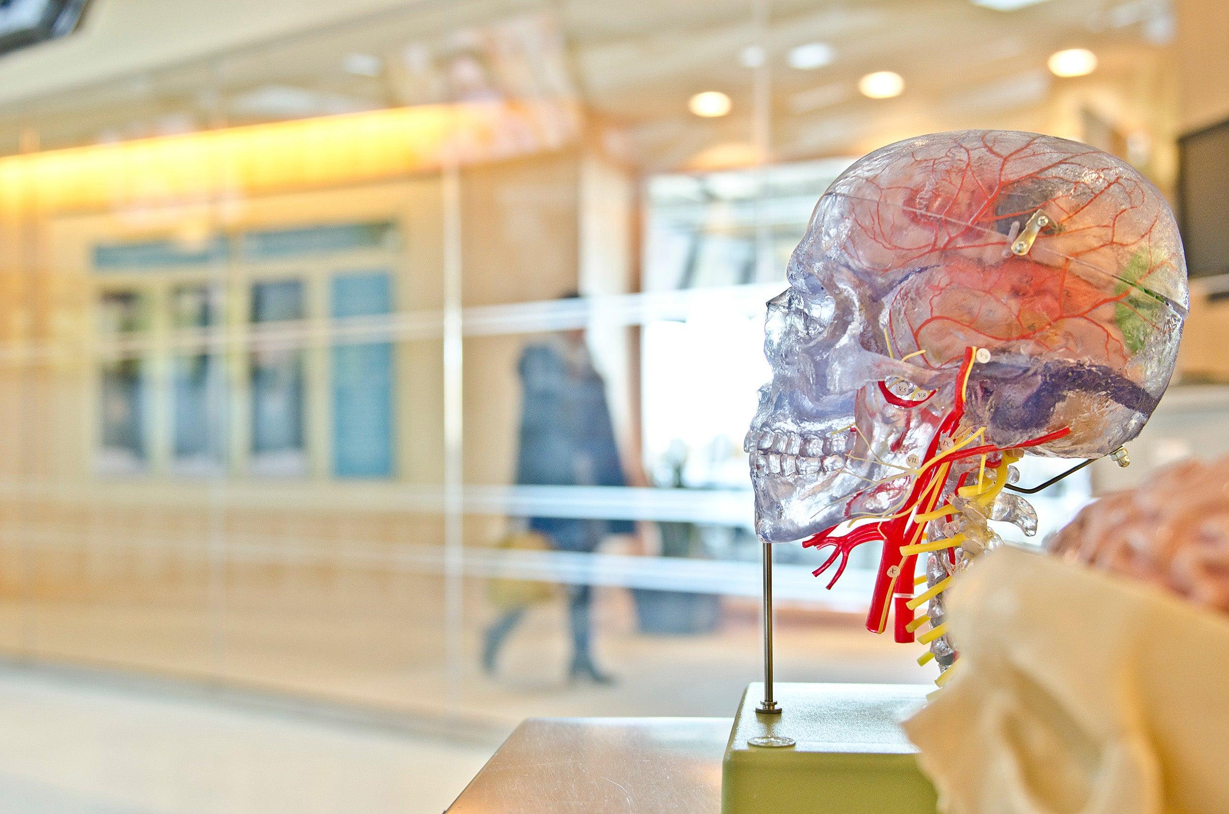 Wyss Institute develops technology to better study blood-brain barrier