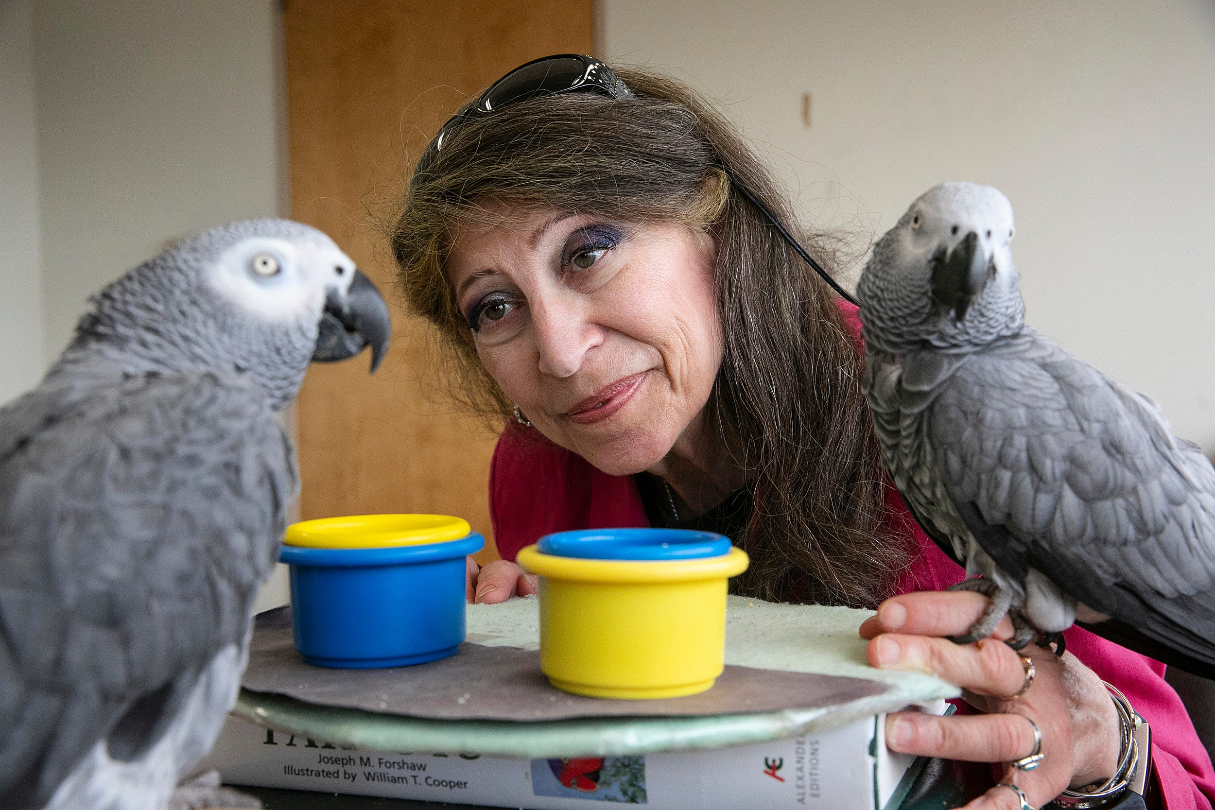 Woman looking at parrots
