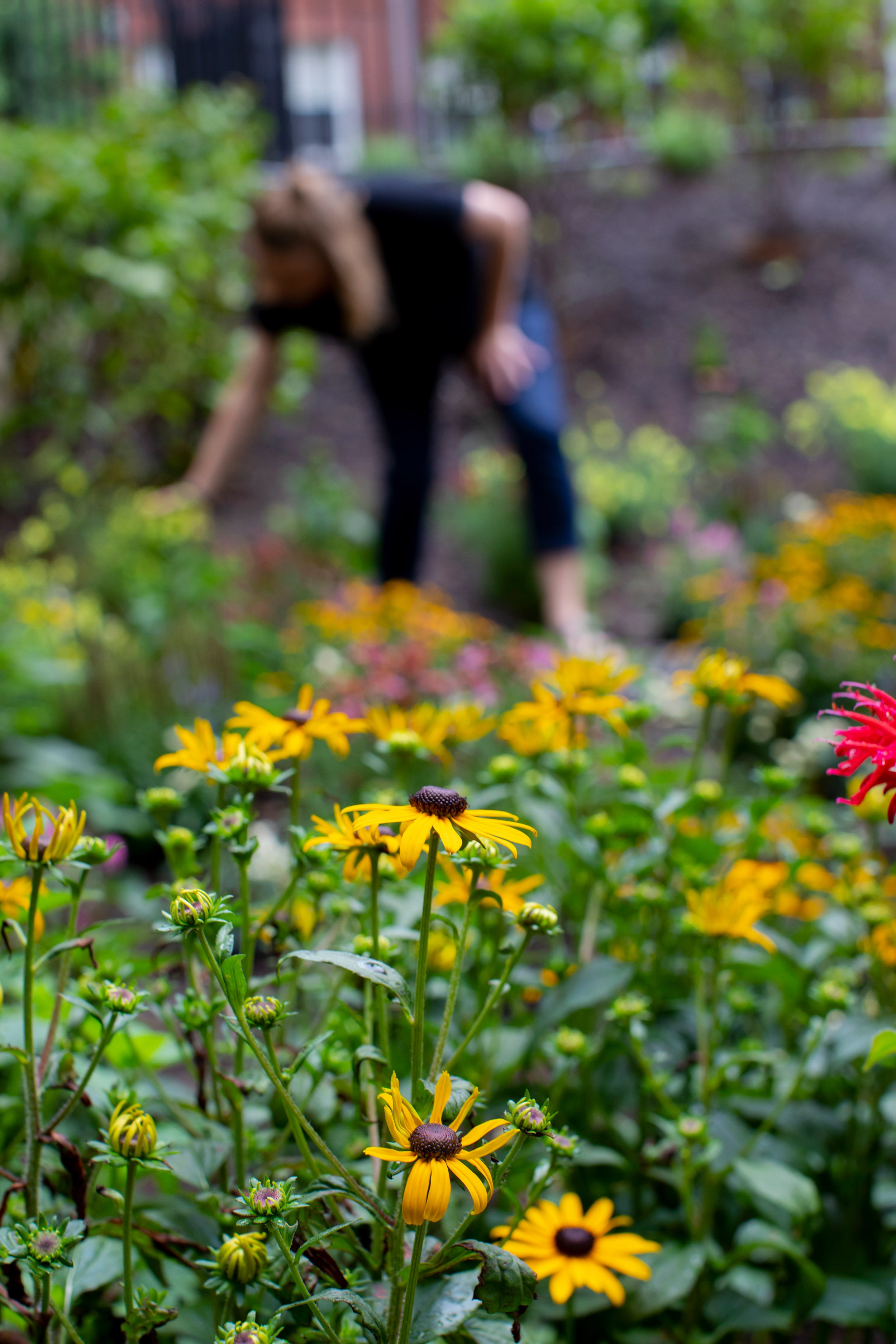 Flowers in the foreground, a person in the background