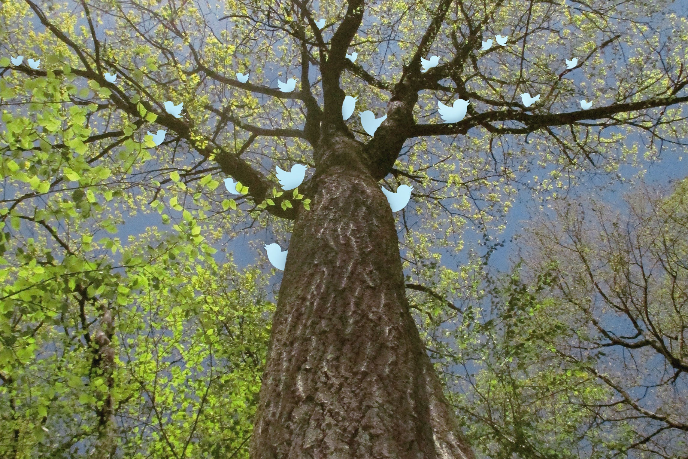 Tree branches with blue birds