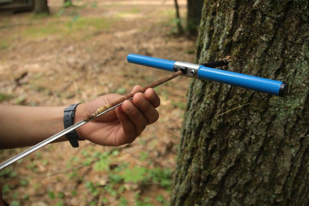 scientific tool measuring a tree