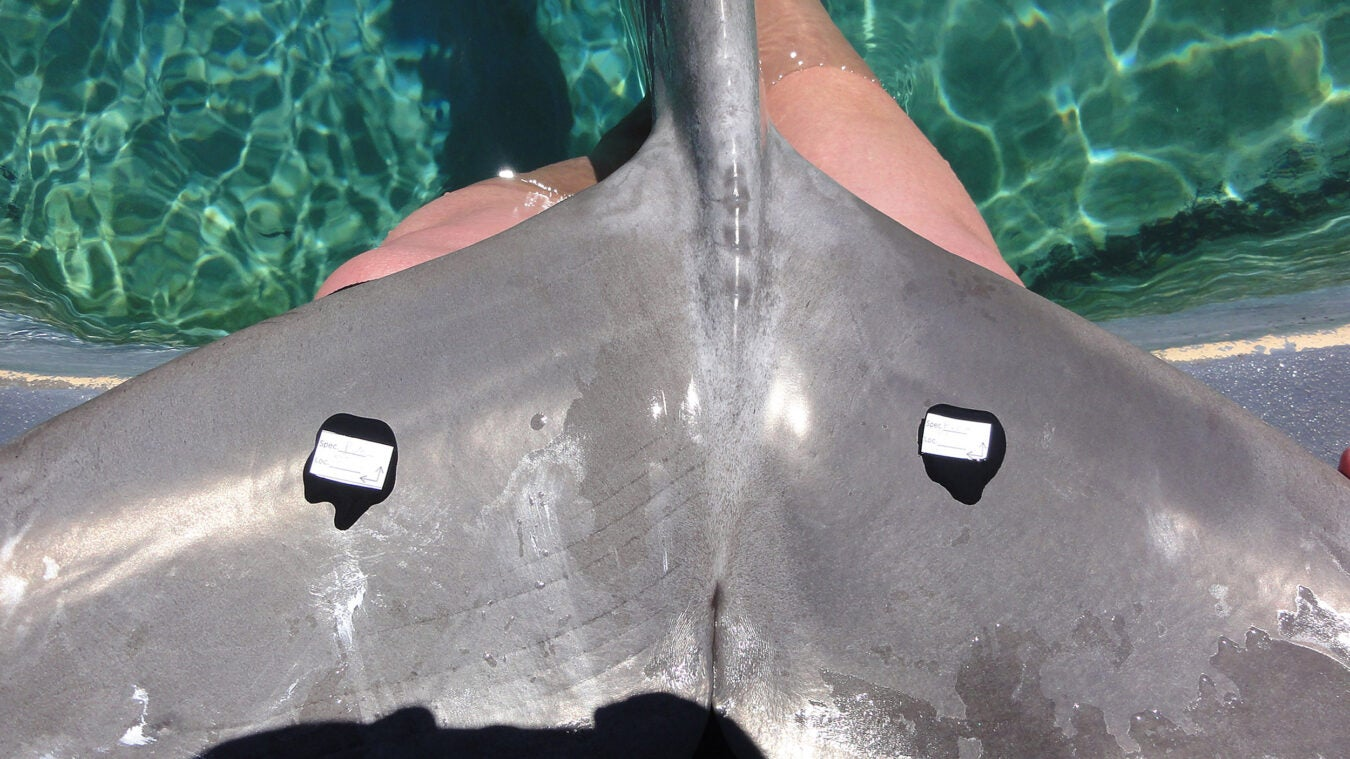 molding compound on tail of dolphin