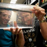 Researchers looking at zebrafish