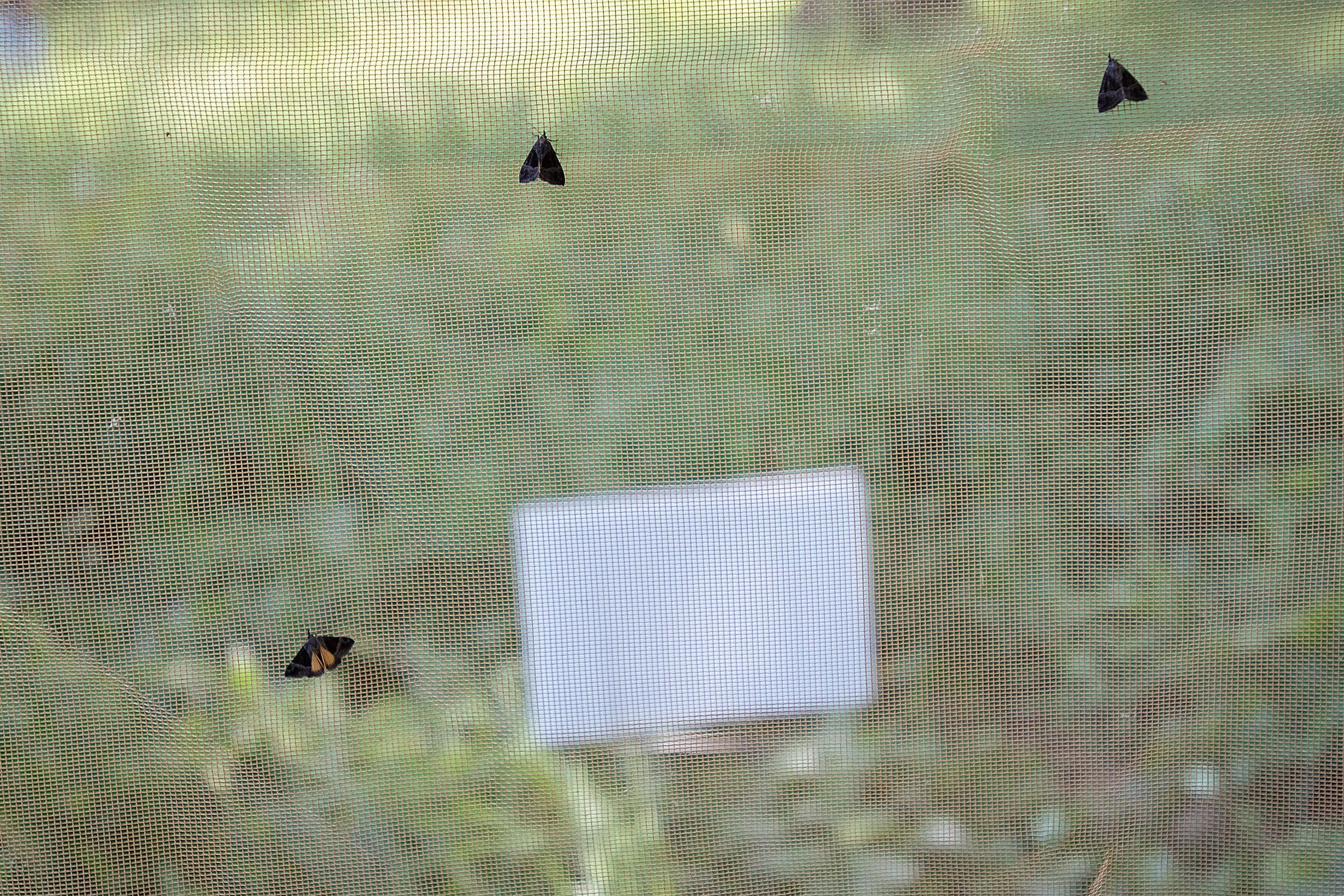 Moths on screen