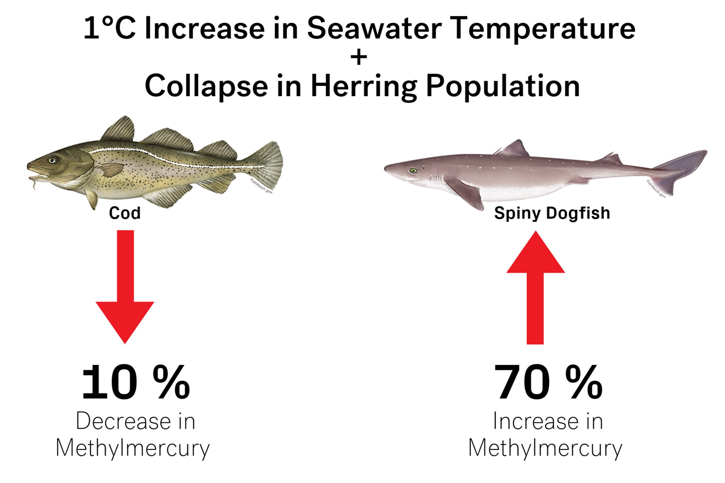 Graphic with herring population decreasing
