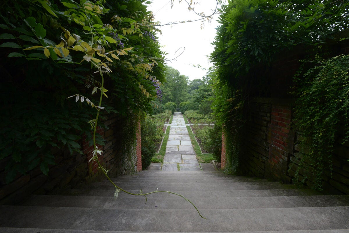 Dumbarton Oaks Research Library and Collections garden.