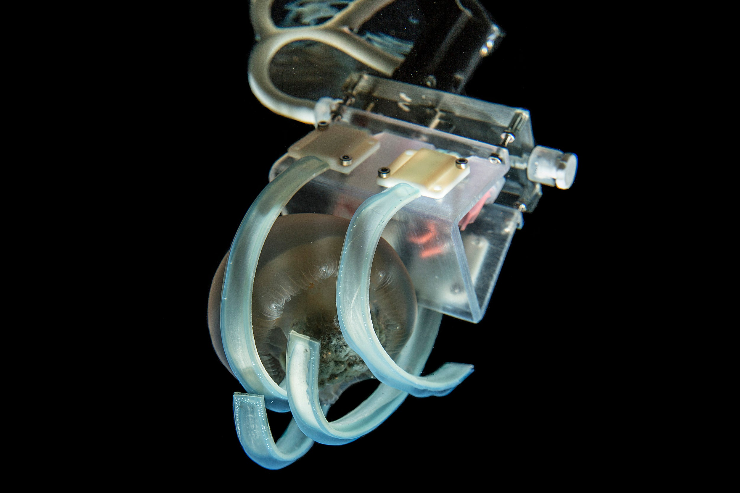 Soft robotic grippers for jellyfish