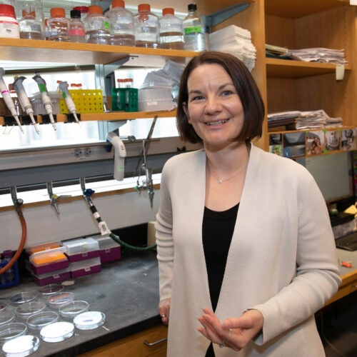 Emily Balskus in her lab.