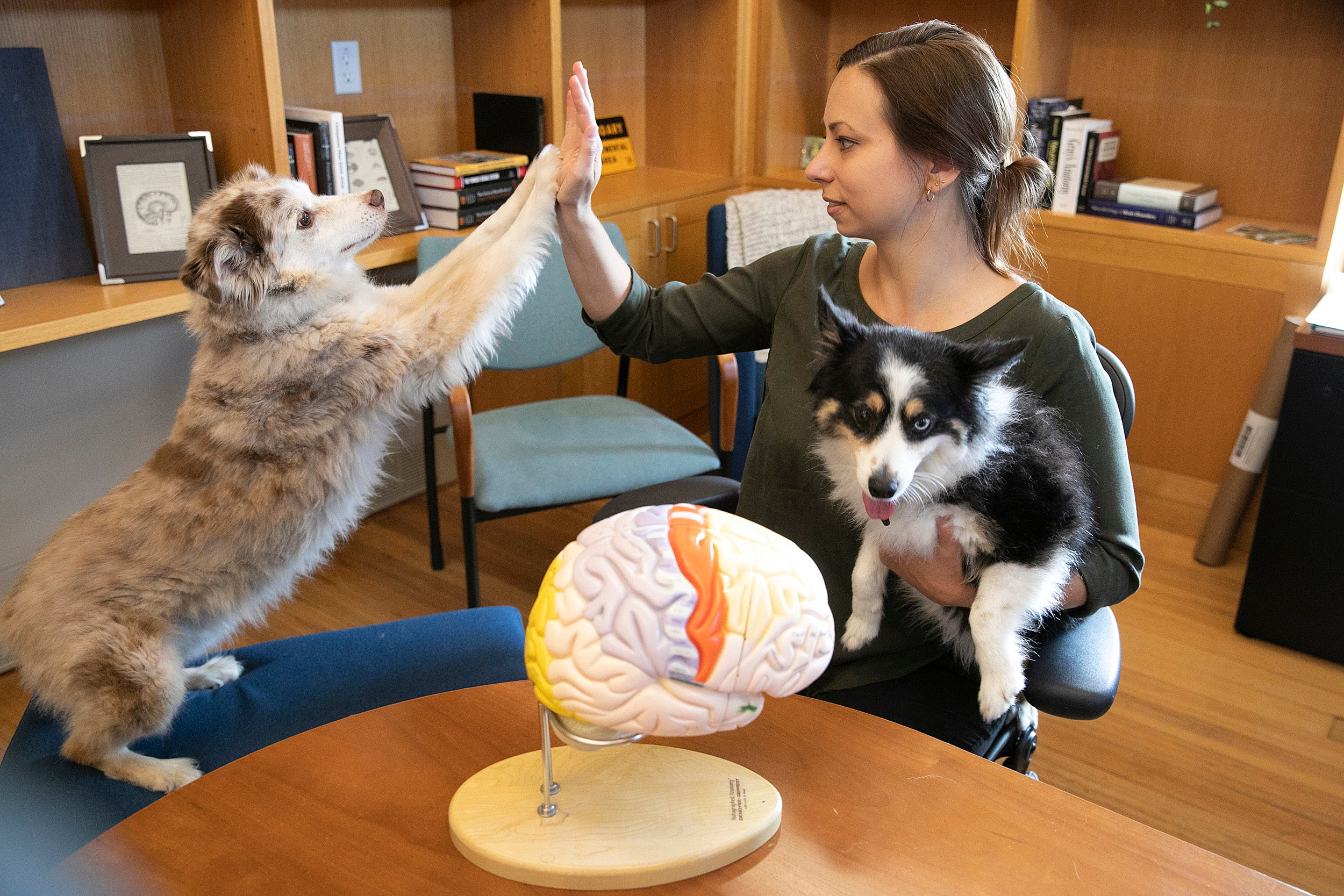 Harvard researcher finds canine brains vary based on breed