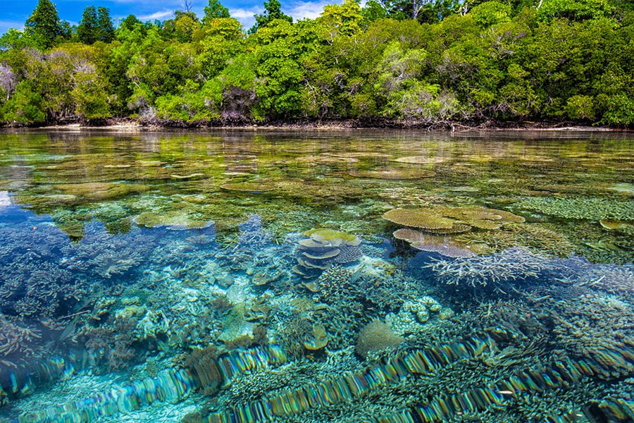 Tropical coastline image courtesy of Pixabay, September 2019