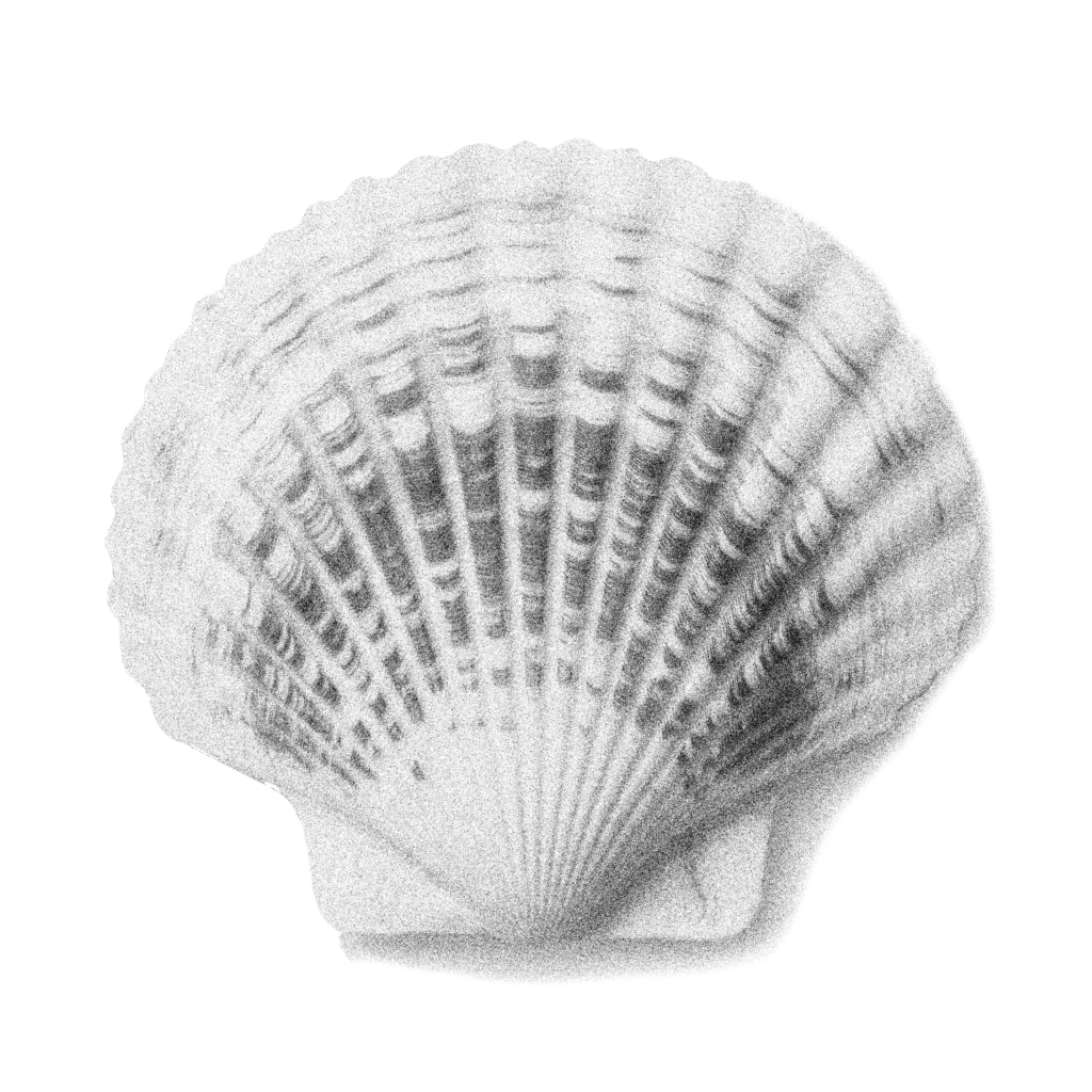 Illustration of a clamshell.