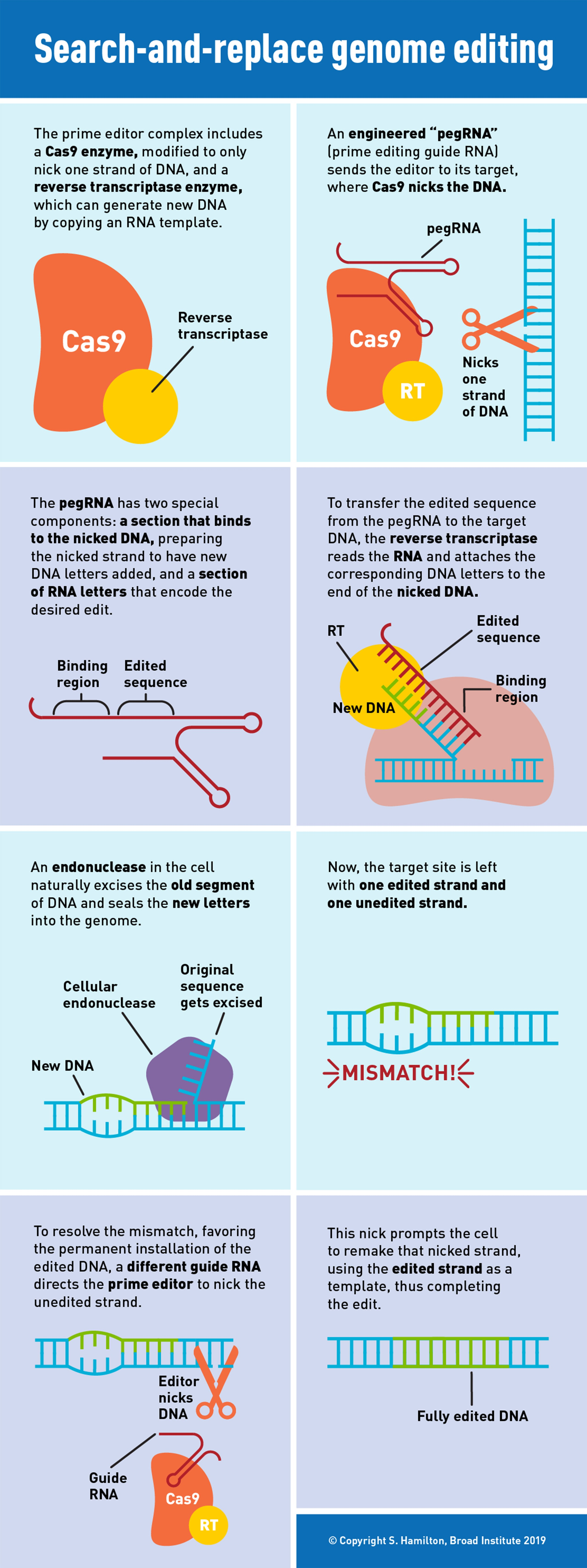 prime editing infographic
