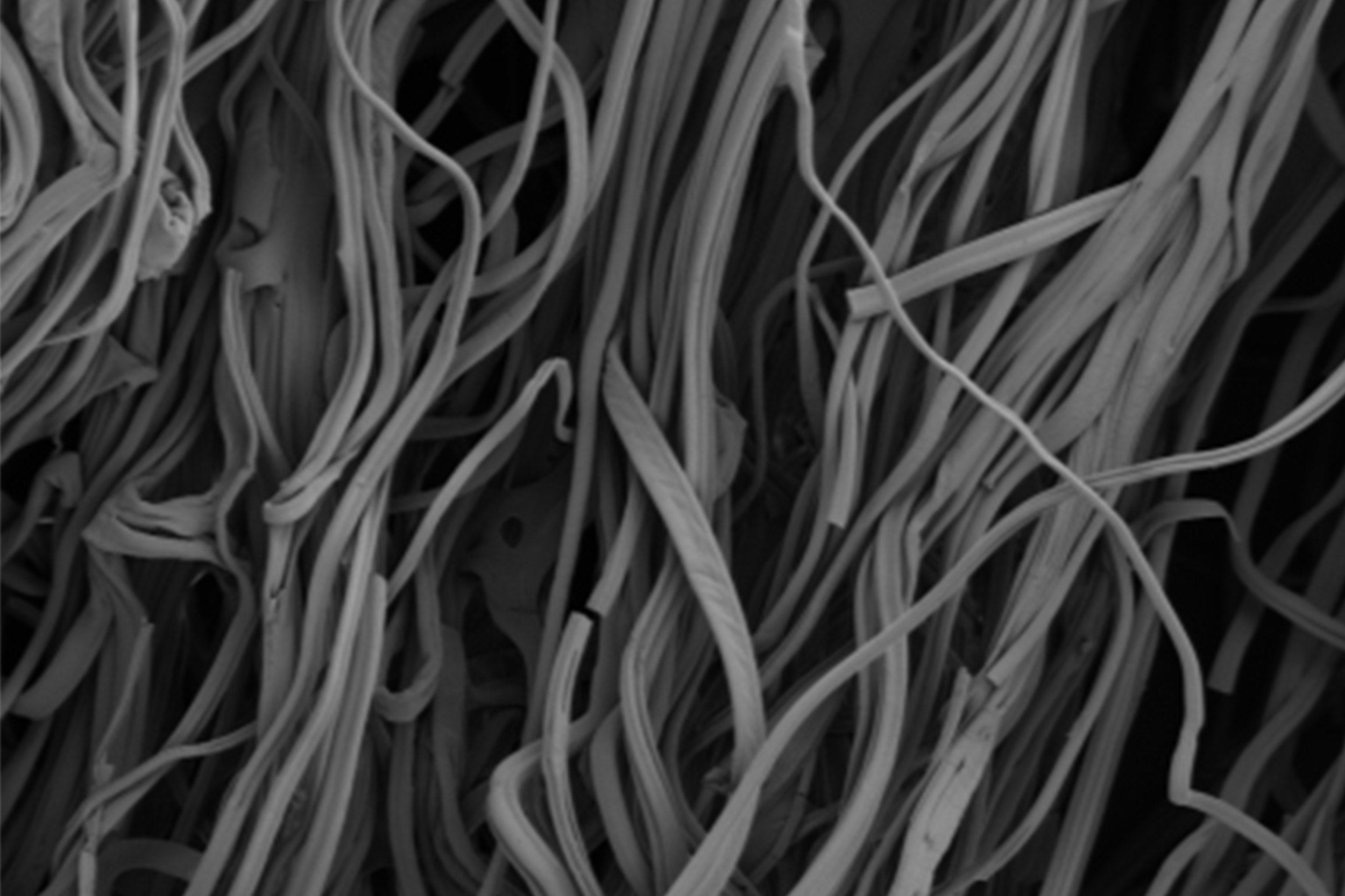 Images of gelatin fibers taken by scanning electron microscopy.