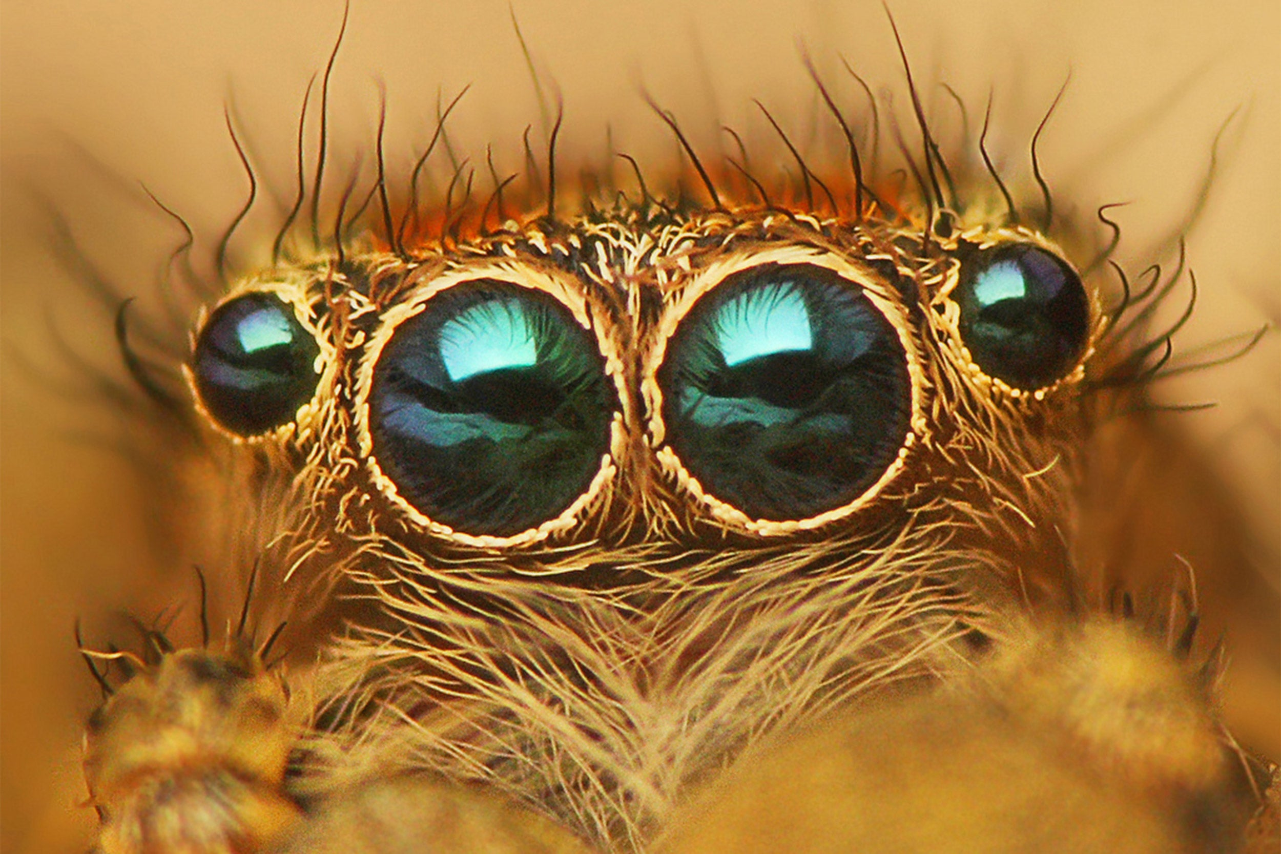 Spider eyes up close.