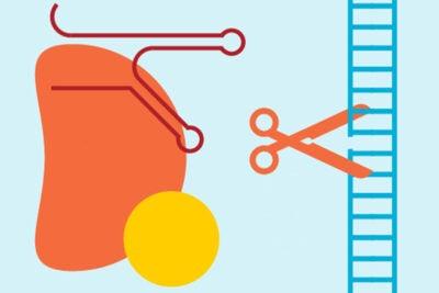 Portion of graphic on CRISPR