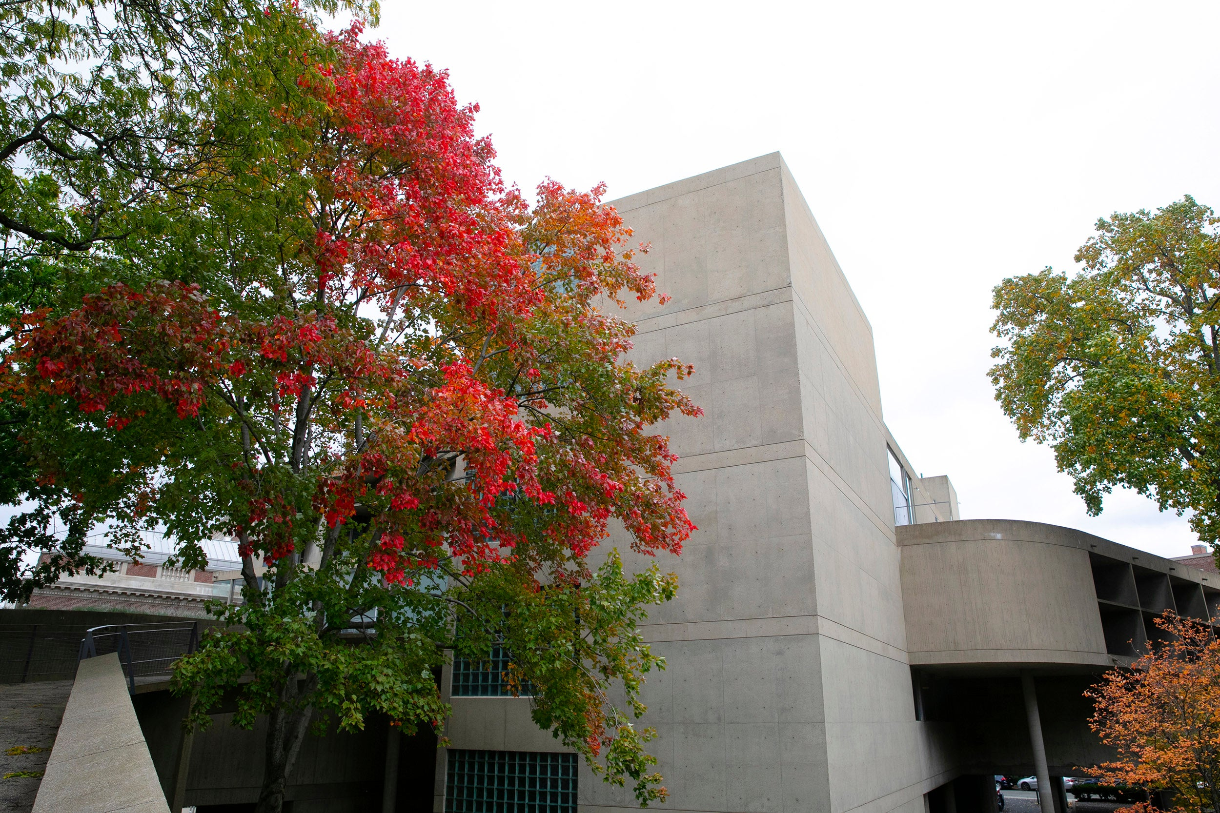 Autumn leaves are on display outside the Carpenter Center.