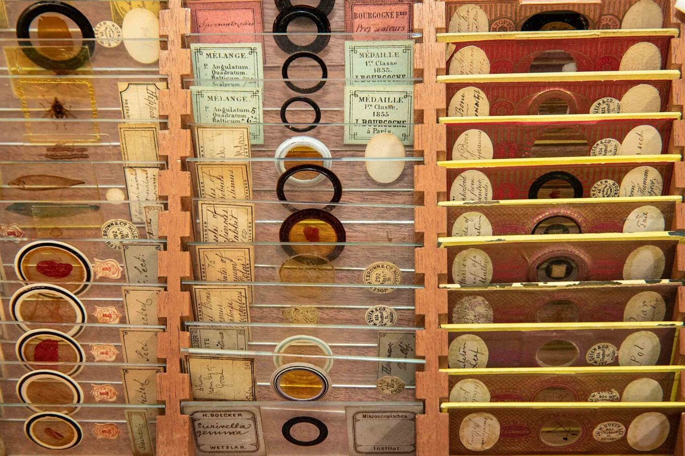 This drawerful of microscope slides contain animal tissue, plants, and insects with a binocular microscope made by H. & W. Crouch, London, 1862-1867.