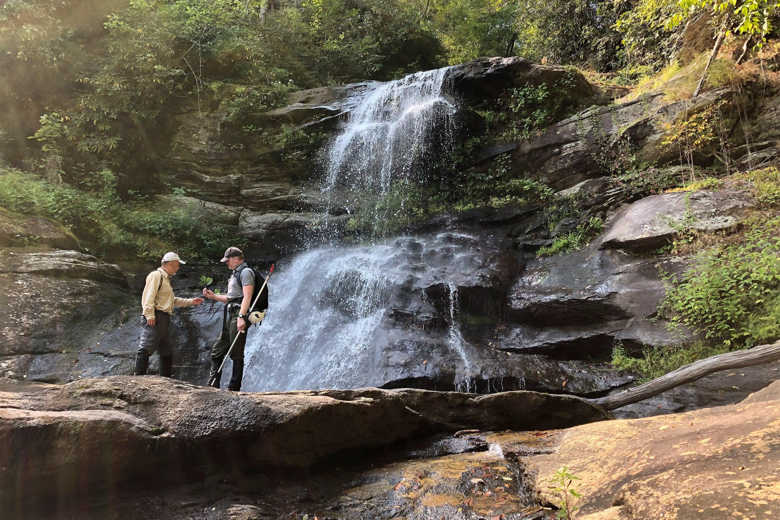 Holcomb Creek Falls in Chattahoochee National Forest in Rabun County, Georgia.