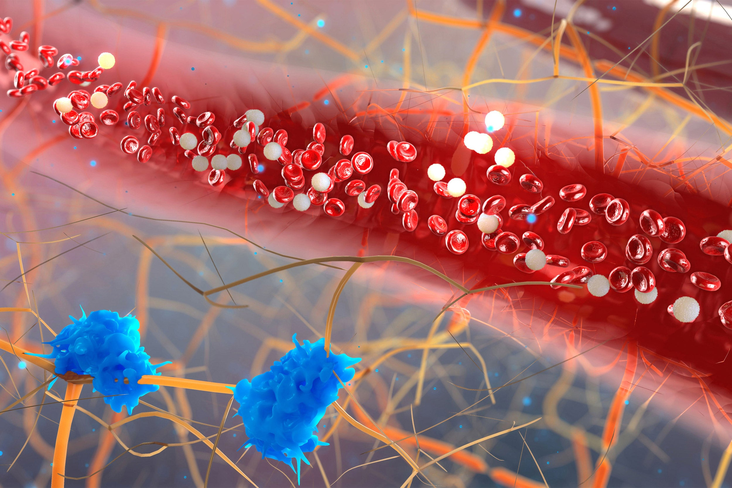Blood vessel with white blood cells