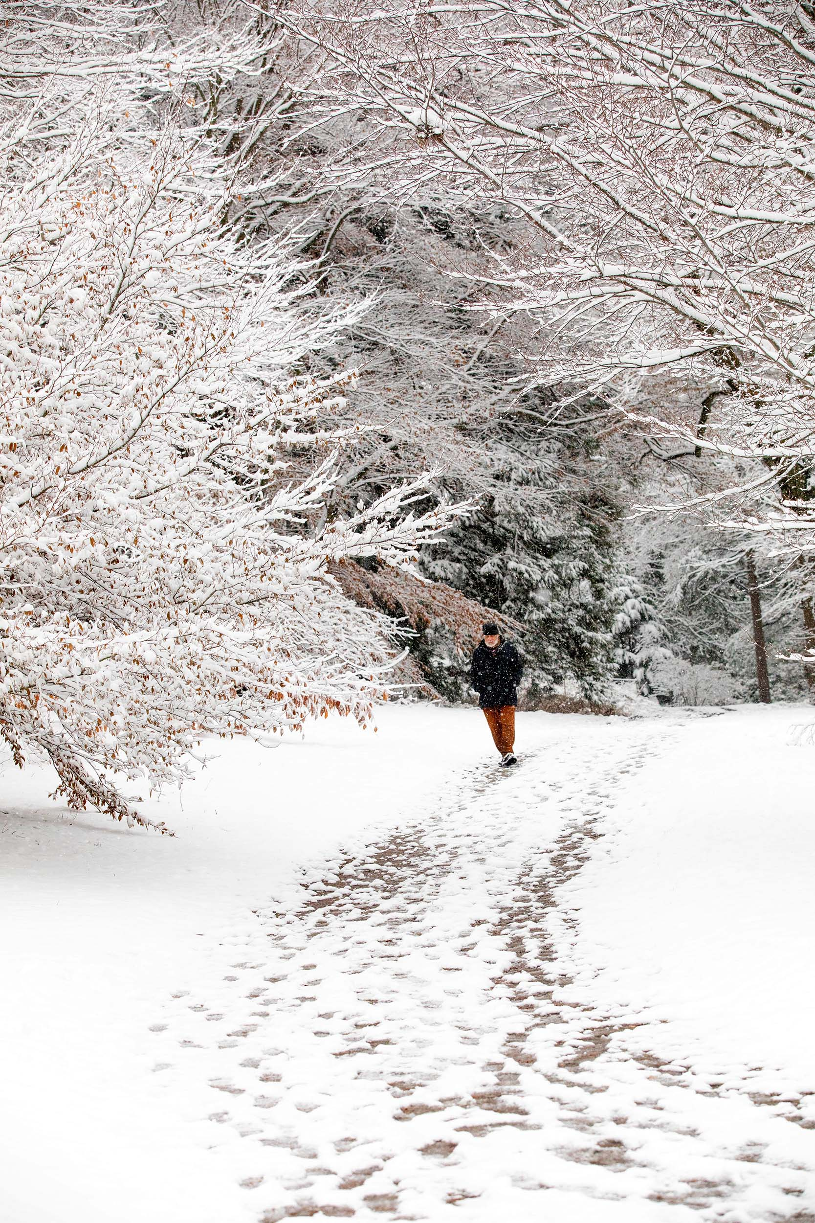 Anthony Apesos of Jamaica Plain walks along a snowy trail.