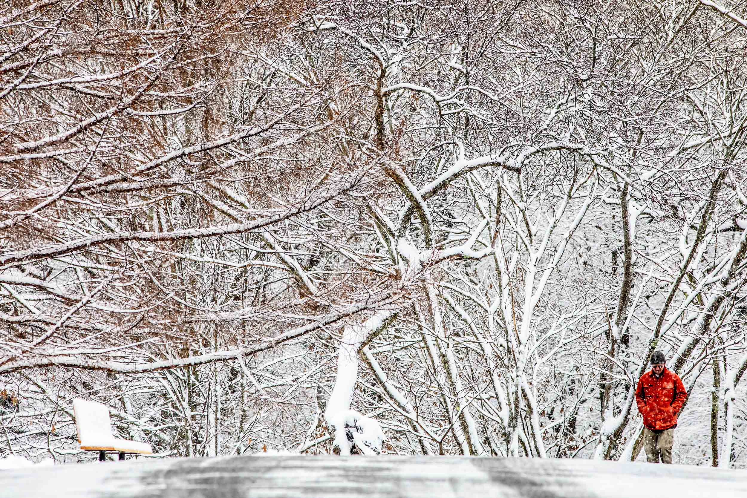 John Jacobs of Roslindale commutes through a snow-covered path of Arnold Arboretum.