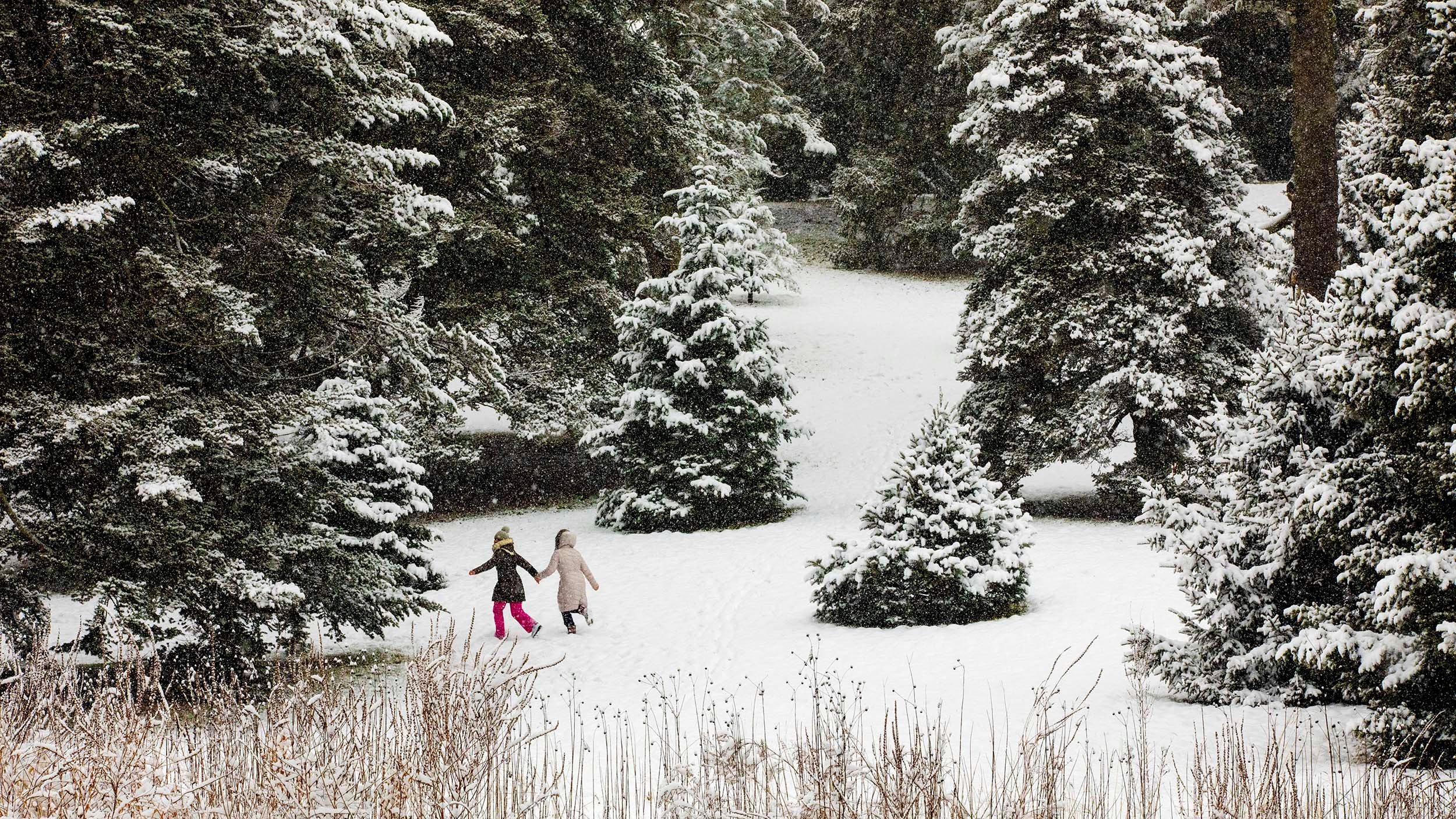 Valentina Iacobciuc and Elena Fevraleva frolic in the Conifer Collection at the Arnold Arboretum.