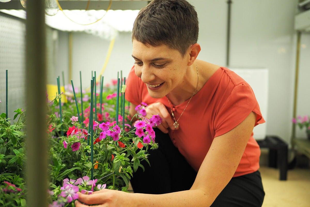 Woman examining flowers.