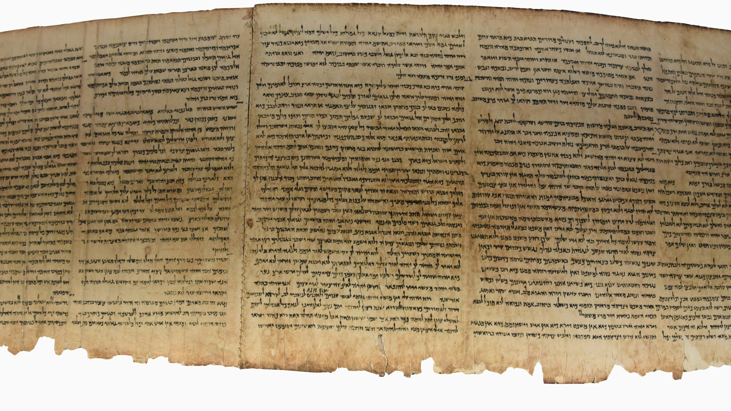 Radcliffe scholar seeks the oldest Bible in the world