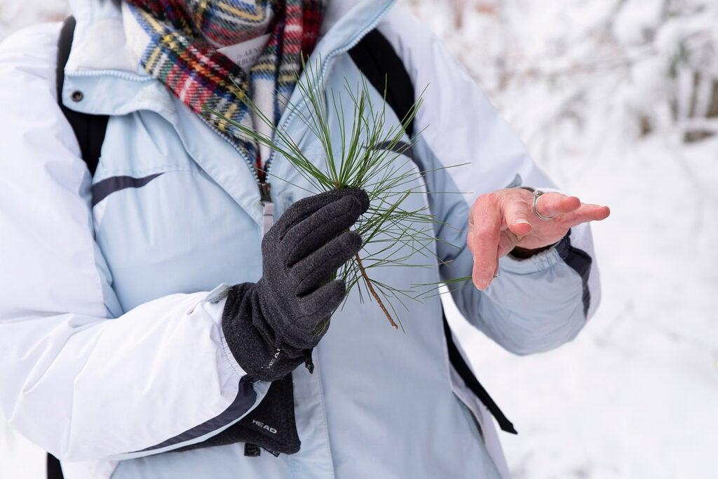 Teacher holding a pine tree sprig.