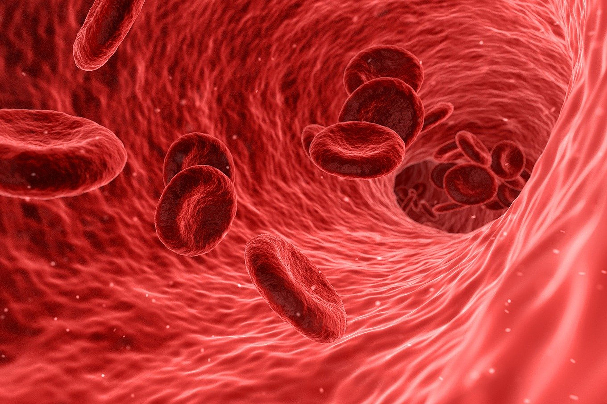 Blood cells.