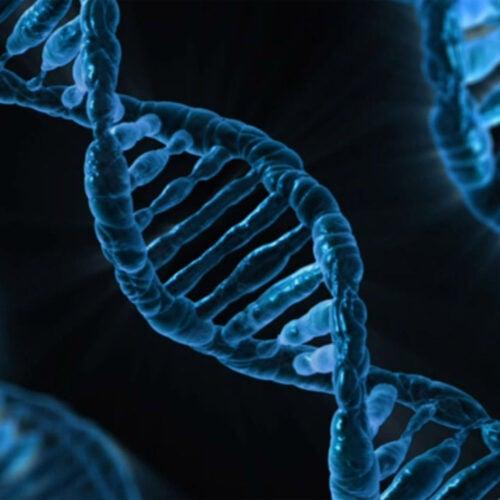 DNA strands.