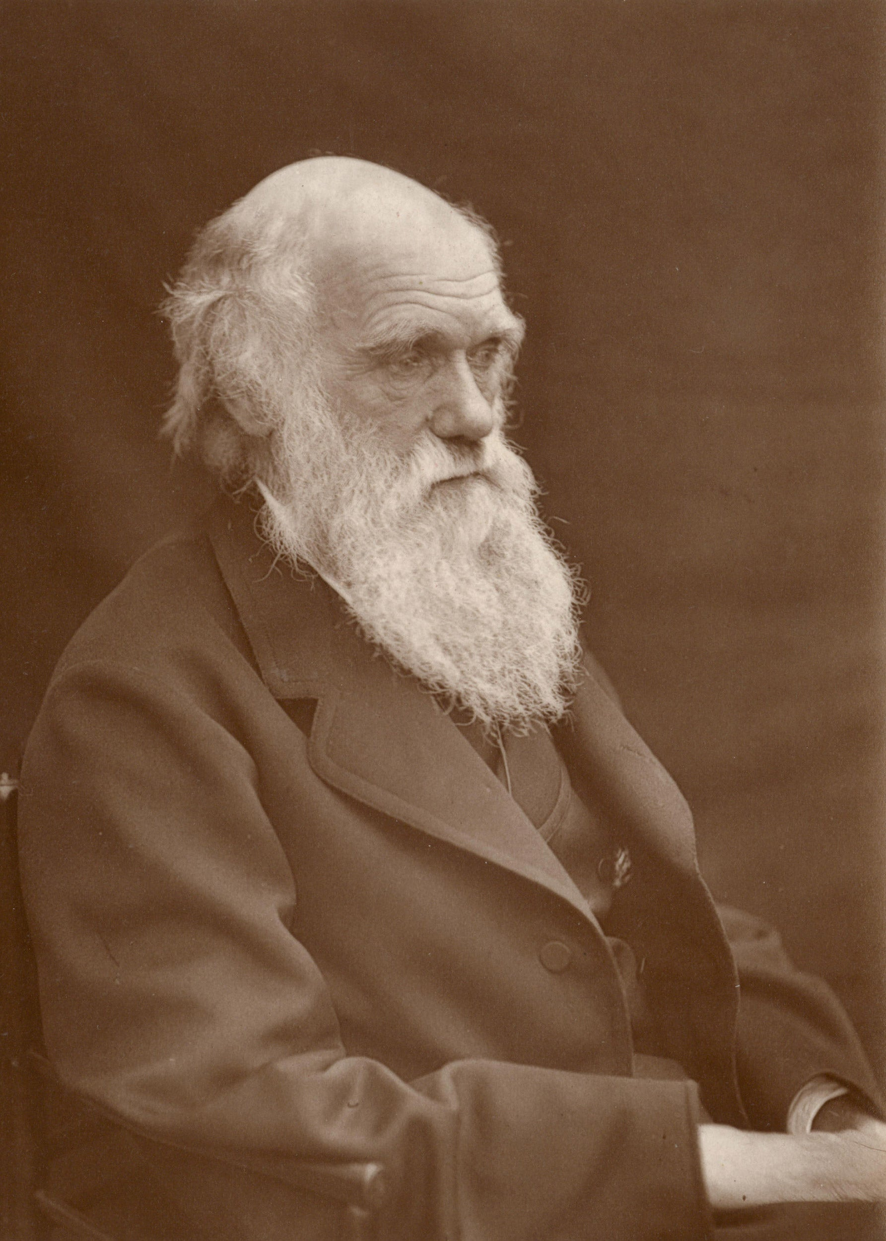 Was Charles Darwin first? Kind of depends – Harvard Gazette