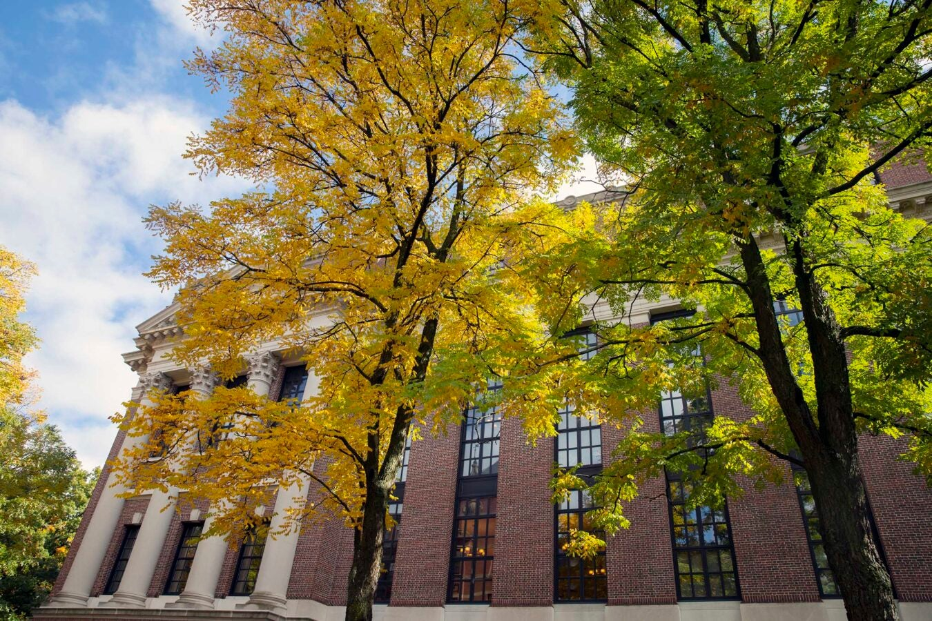Trees frame The Widener Library in Harvard Yard.
