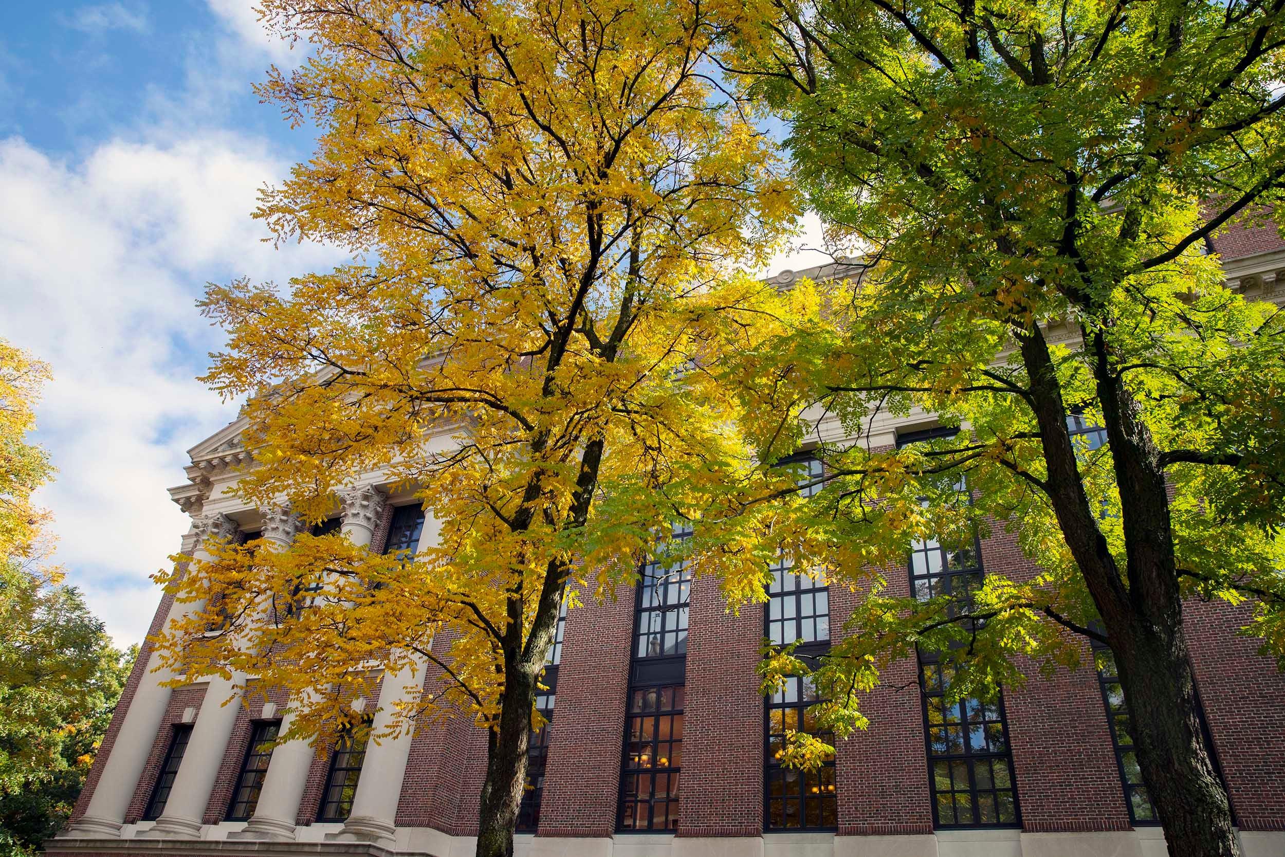 Trees frame The Widener Library in Harvard Yard.