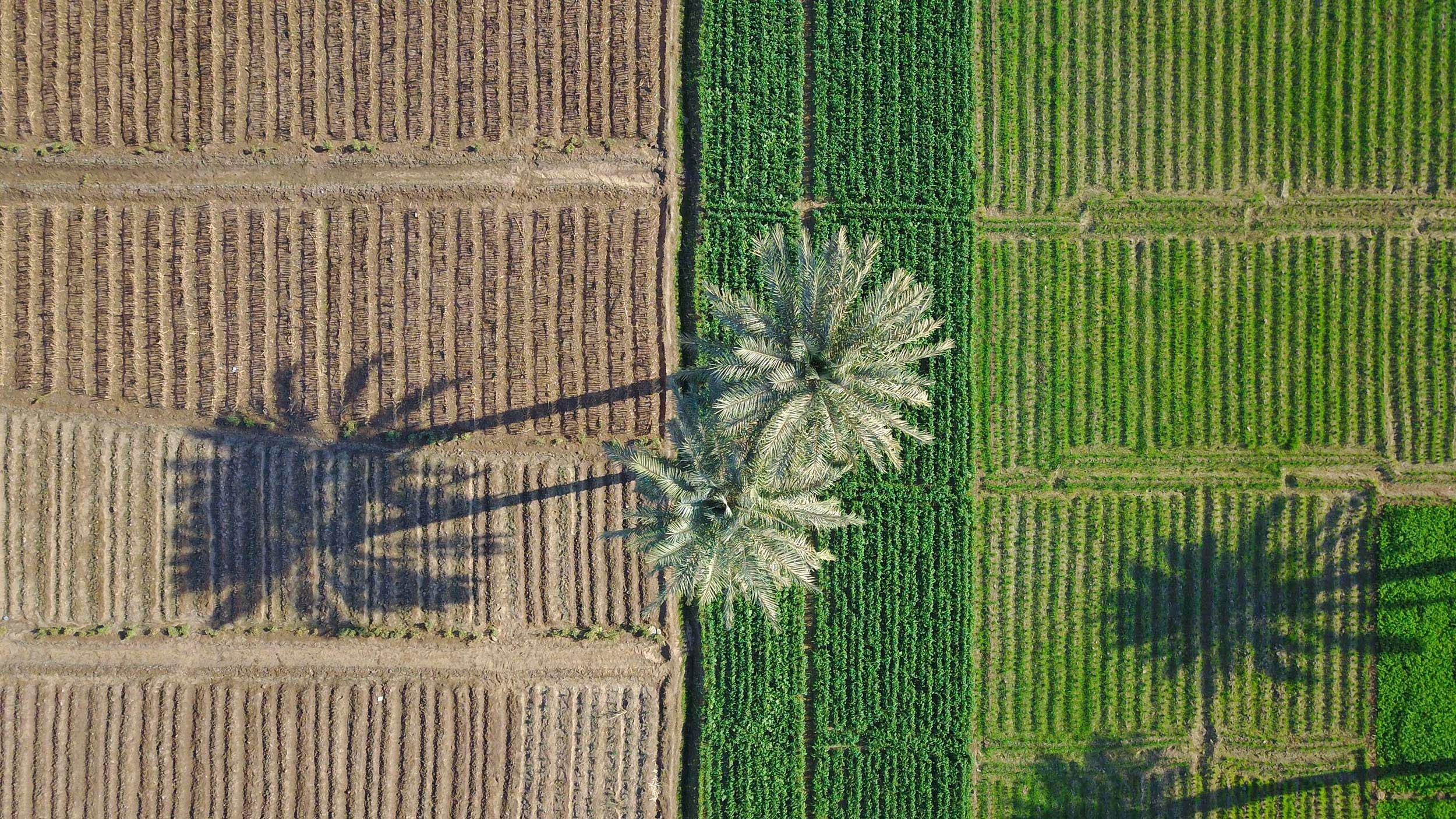 """Half and Half' by Hashem Abdou. Pairs of palm trees cast shadows on multi-colored landscape."