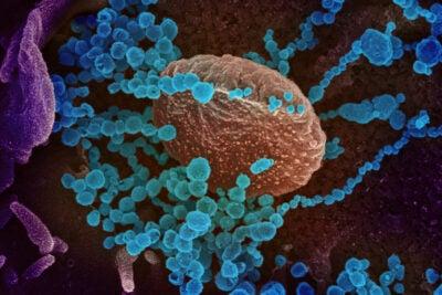 Novel-Coronavirus-SARS-CoV-2