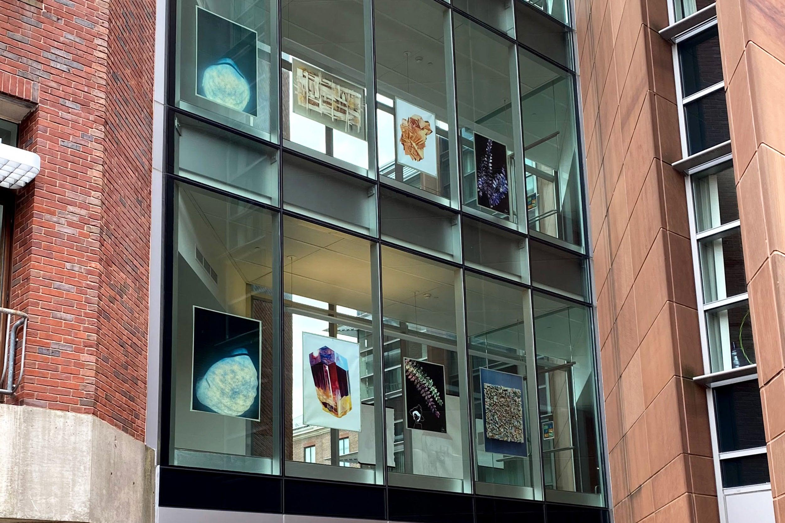 Artwork in the windows of Harvard buildings.