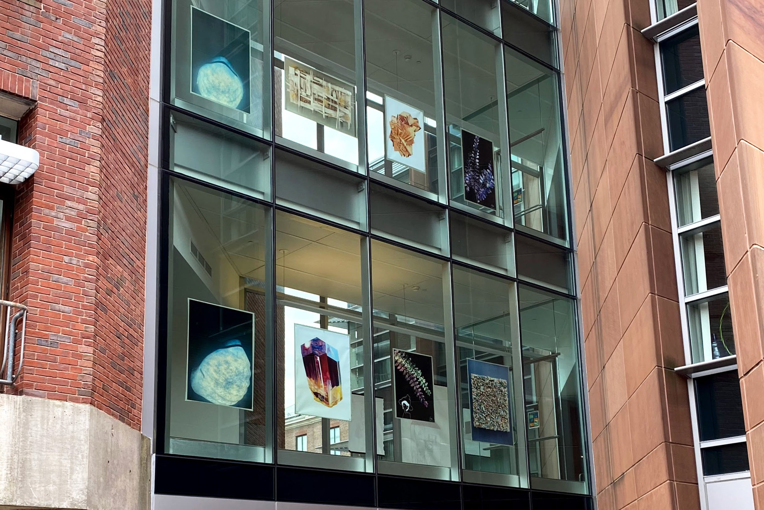 Artwork in the windows of Harvard buildings.