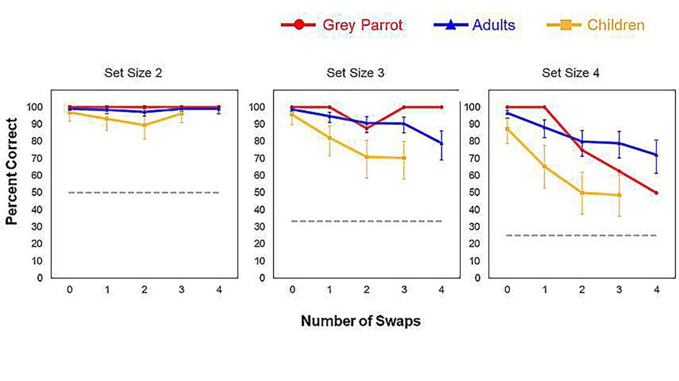Graphs.