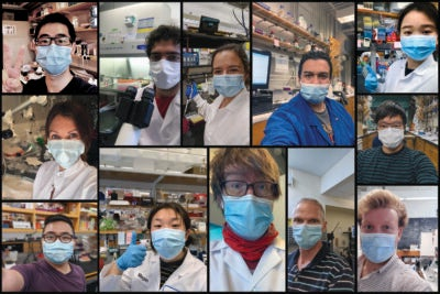 Collage of selfies by masked Harvard researchers back in their labs.