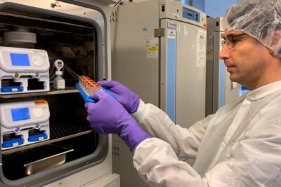 Amir Bein checks a batch of human organ chips in the lab.