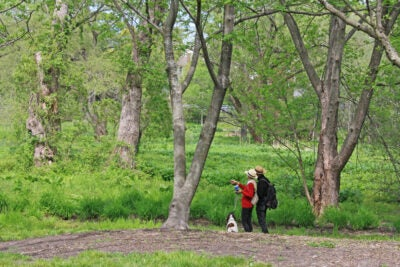 Visitors at Meadow Road in the Arnold Arboretum.