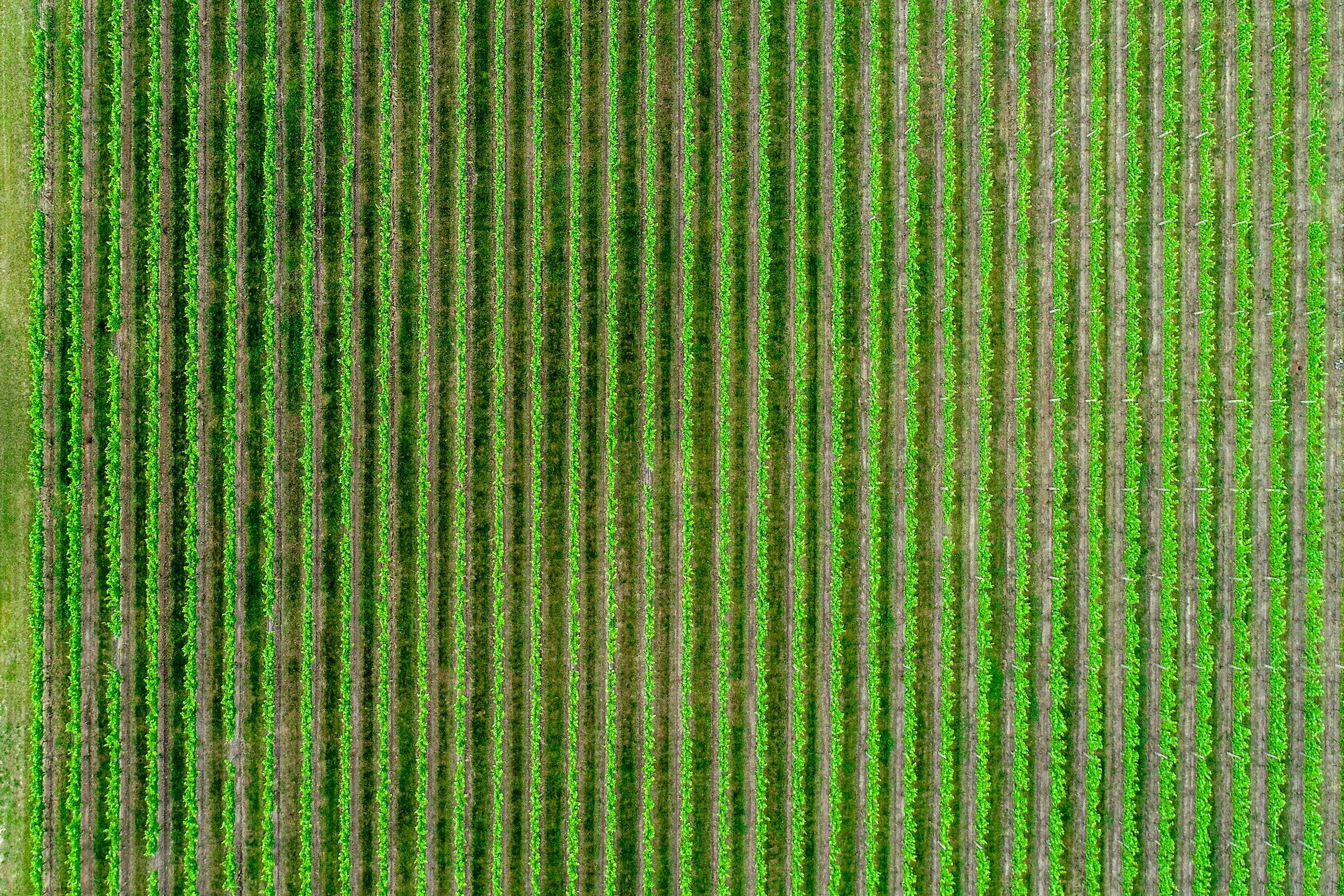 Green field.