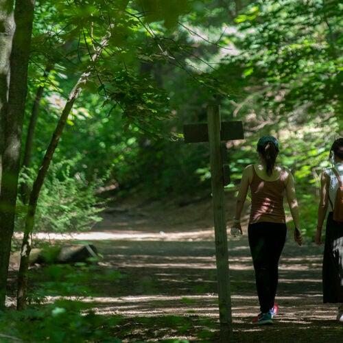 People walking in the forest.