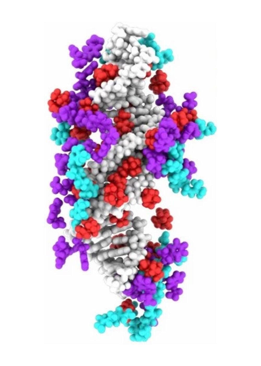 IL-siRNA molecular dynamic simulation.