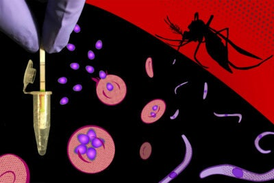 Malaria Diganostic illustration.