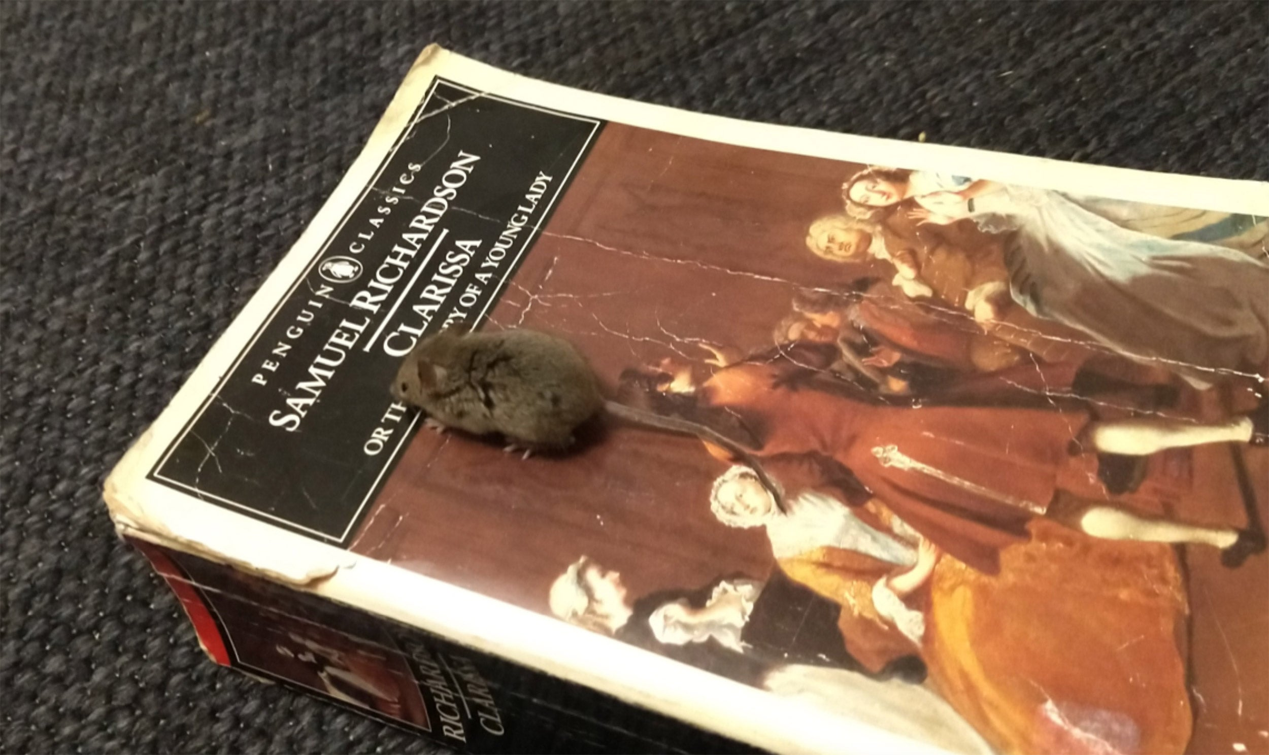 A mouse on a book.