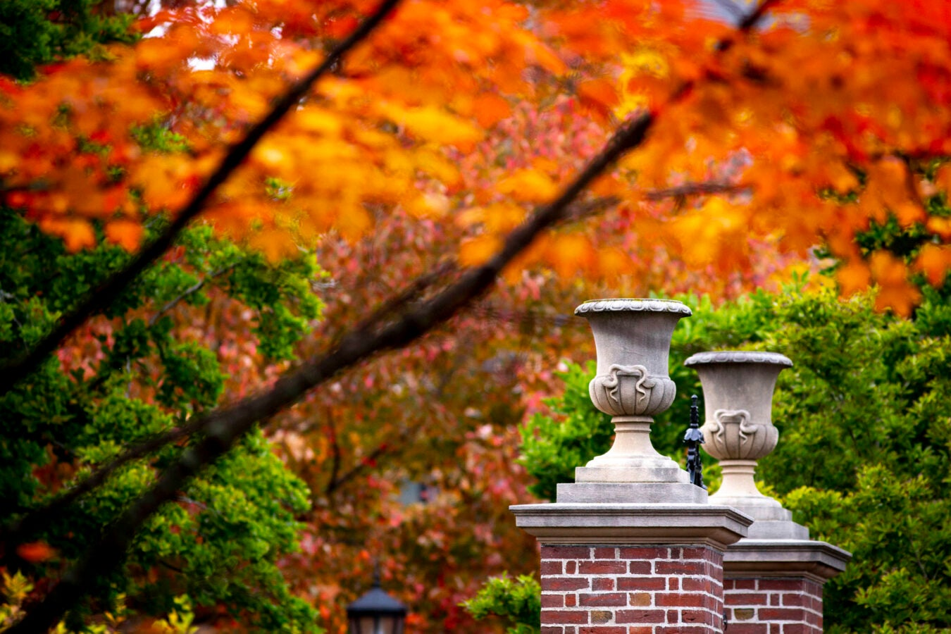 View of fall foliage at Radcliffe Yard.